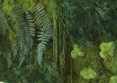 Plantes stabilisées