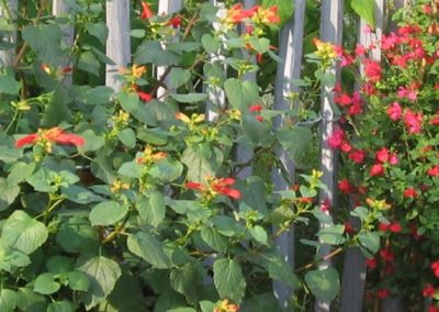 NB Jardins - Végétaux